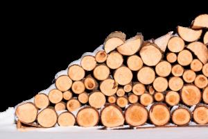 España apenas utiliza el 35% de la biomasa que generan los bosques cada año